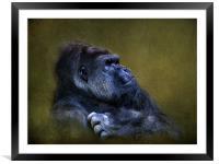 Silverback Gorilla, Framed Mounted Print
