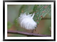 Floating Feather, Framed Mounted Print