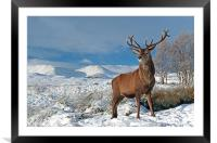 Deer Stag, Glencoe, Framed Mounted Print