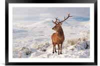 Deer Stag in the snow, Framed Mounted Print