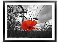 War Poppy, Framed Mounted Print