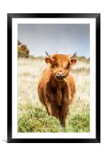 Beast of Dartmoor., Framed Mounted Print