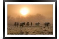 A Winter Morn., Framed Mounted Print