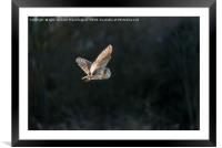 Hunting on the wing , Framed Mounted Print