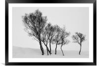Winter Trees in a Field of Snow, Framed Mounted Print