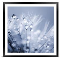 Dandelion Seed with Water Droplets in Blue, Framed Mounted Print