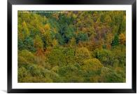 Autumn in the air, Framed Mounted Print