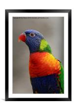 Colourful , Framed Mounted Print