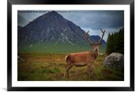 Monarch of the Glen at the Buachaille , Framed Mounted Print