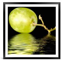 just a  green grape, Framed Mounted Print