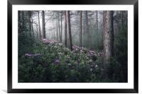 Rhoddies in the Mist, Framed Mounted Print