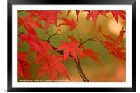 Natures Colours., Framed Mounted Print