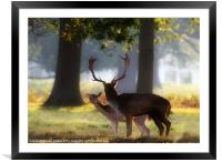 Alone at last., Framed Mounted Print