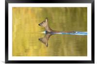 In Golden Pond, Framed Mounted Print