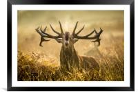 Stand and deliver !!, Framed Mounted Print
