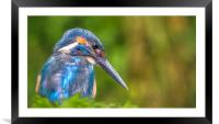The look, Framed Mounted Print