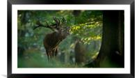 Call of Nature, Framed Mounted Print