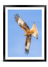 Spread your wings , Framed Mounted Print