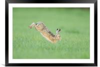 Hare I go, Framed Mounted Print