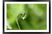 Early Morning Dew, Framed Mounted Print