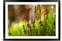 Moss Sparkles, Framed Mounted Print