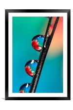 Blooming Needle, Framed Mounted Print