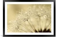 Dandelion Drops, Framed Mounted Print