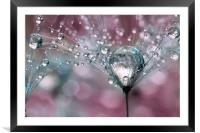 Rasberry Sparkles, Framed Mounted Print