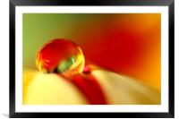 Tulip Droplet, Framed Mounted Print