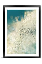 Dandy Dazzle, Framed Mounted Print