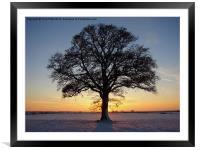Oak Tree, Framed Mounted Print