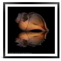 Shell Study Reflection, Framed Mounted Print