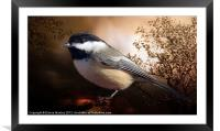 Black Capped Chickadee, Framed Mounted Print