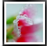 Abstract of raindrops on a Petunia flower leaf , Framed Mounted Print