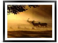 Golden Glow, Framed Mounted Print