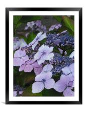 Sweet Purple Paradise!, Framed Mounted Print