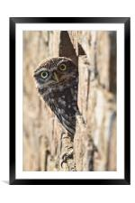 What you looking at!, Framed Mounted Print