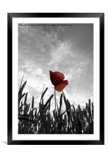 Red Poppy Amongst the Wheat, Framed Mounted Print