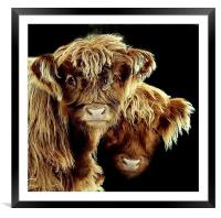 The look of curiosity, Framed Mounted Print
