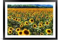 Sunflower Fields Of Dreams , Framed Mounted Print