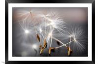 dancing dandelion heads, Framed Mounted Print