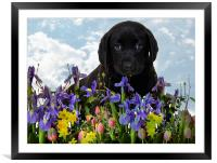 puppy love, Framed Mounted Print