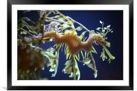 Sea Dragon , Framed Mounted Print