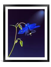 Blue Bloom, Framed Mounted Print