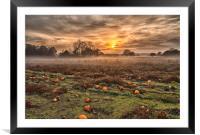 Pumpkins At Dusk, Framed Mounted Print