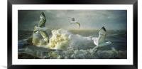 Herring Gulls on The Mersey, Framed Mounted Print
