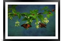 Going Buggy, Framed Mounted Print