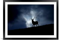 The stag, Framed Mounted Print