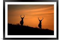 Stags silhouette, Framed Mounted Print