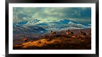 Stags at Strathglass, Framed Mounted Print